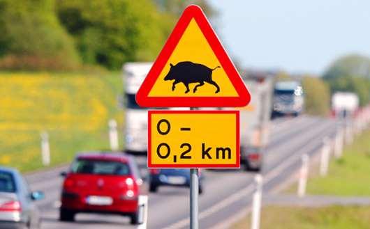 [新聞]移民瑞典生活的人們會經常在瑞典公路旅行嗎?
